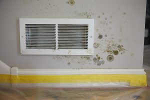 What Are the Symptoms of Long-Term Mold Exposure?